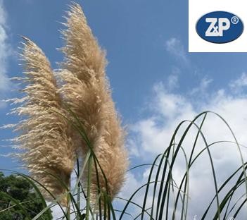 农机社会化服务提档升级 将迎黄金发展期